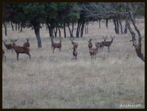 Grupo de  ciervos